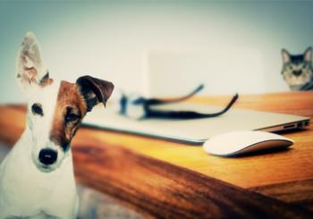 Comunità online tematiche: l'esempio delle pet community